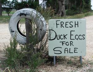 duckeggs